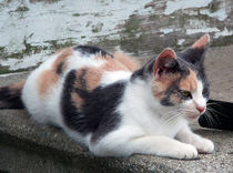 Beth's Cat von Sandra Woods