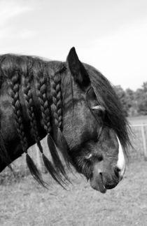 Shire horse portrait  von Linda More