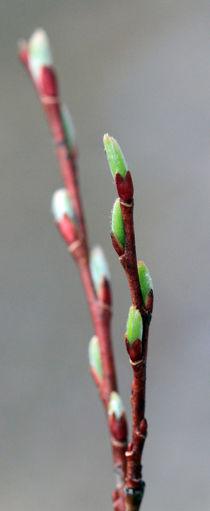 Frühling von Jens Berger