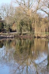pond reflection by mark-philpott