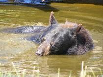 bathing bear by mark-philpott