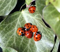 ladybirds on a leaf by mark-philpott