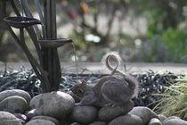 drinking squirrel by mark-philpott