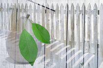 Garten von netteart