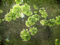 Green-blossoms