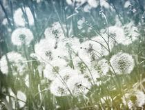 Frühlingswiesenlichter von Franziska Rullert