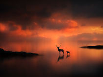 The-deer-at-sunset