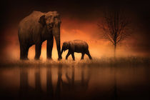 The Elephants at Dusk by Jennifer Woodward