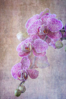 Orchid by Rozalia Toth