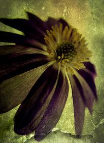 Textured Anemone. von rosanna zavanaiu