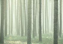 Nebelwald von matt-spitz