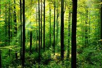 Frühlingswald von matt-spitz