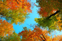 Herbstwald von matt-spitz