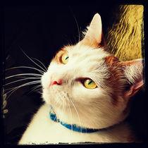 Feline Portrait. von rosanna zavanaiu