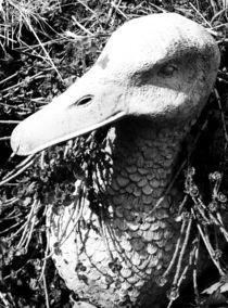 Ente Schwarz-Weiß von ismira