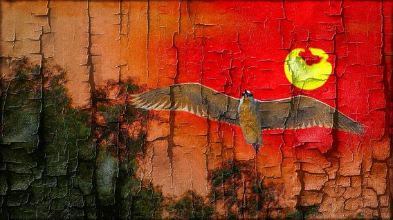 Night-heron-with-sun-down-photo4me