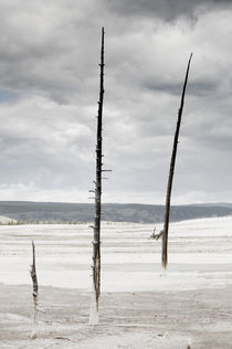 Three Dead Trees in Barren Landscape. by Tom Hanslien