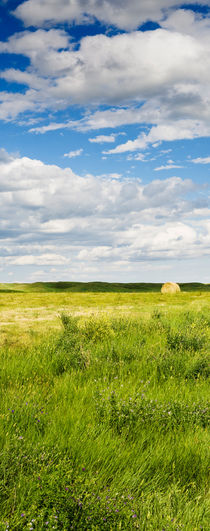 Hay-ball in a field in South Dakota, USA. von Tom Hanslien