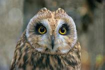 Owldsc01803-2