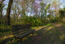Bench Near Centennial Lake