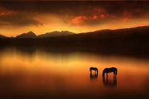 The-horses-at-sunset