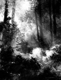 Forest001