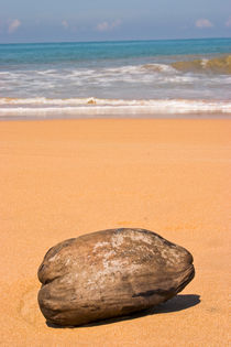 Beach Sri Lanka by reorom