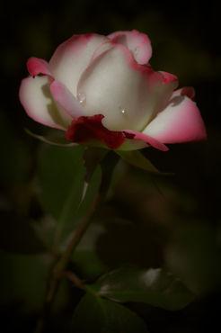 Flower603