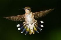 hummingbird409 by Roger Brandt