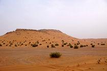 Wüste von Daniela  Bergmann