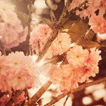 barocker frühling - baroque springtime von augenwerk
