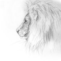 LION KING by Karin Russer
