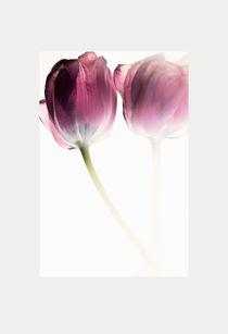 Tulips in fog by Robert  Perks