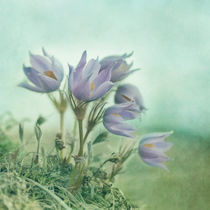 'on the crocus bluff' von Priska  Wettstein