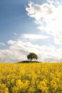 Farben des Frühlings von Jana Behr