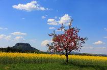 Farben des Frühlings von Wolfgang Dufner