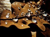 Autumn leaf with raindrops by Melinda Szente