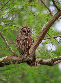 Whooo by Louise Heusinkveld