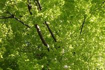 Atempause unterm Blätterdach von pichris