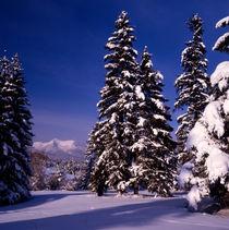 winter im oberen isartal; deutschland, bayern von helmut krauß