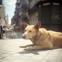 Dog von Nuno Bernardo