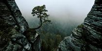 Einsamer Baum umrandet von Bergen by Andreas Schott