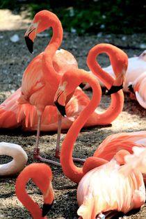 Flamingos von Bianca Baker