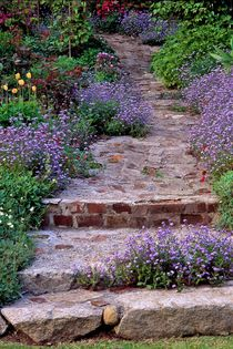 202af-mystery-garden-path-auto-961372-002-v-15