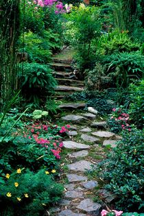Stepping Stone Garden 220 by Patrick O'Leary