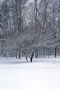 357af-winter-stillness-900079-001-v-9