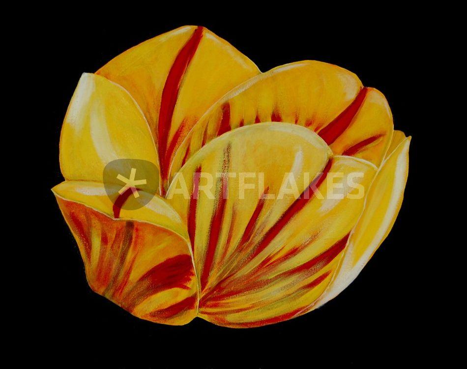 Tulpe Englisch