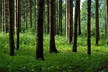 Sommerwald von Lisa Assimont