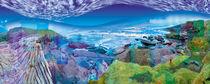 Land angel land 2012 by Eddy Crowley