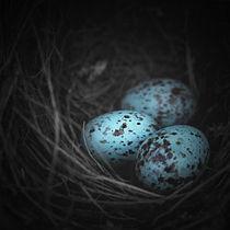Nest of 3  von Trish Mistric
